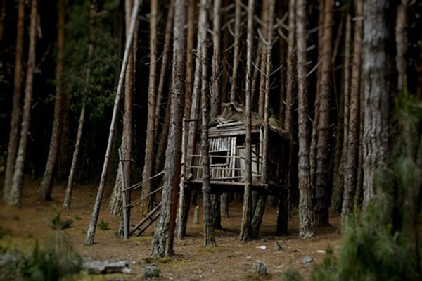 Căn nhà gỗ giữa rừng già