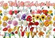 Tuyển tập truyện cổ tích về các loài hoa