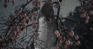 Thiếu nữ chết treo trên cây hổng đỏ - Seri Truyện Ma Rằm Tháng Tám
